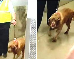 Military Dog Was Taken Away From Her Sergeant. 2 Years Later, She Hears Him Call Her Name
