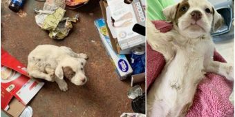 His gut tells him to look inside receptacle, Sees tiny wounded pup looking up at him