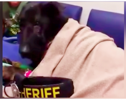 Minutes Before K9 Cop Is Put Down- Radio Call Breaks In With Message