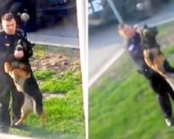 Shameless Officer Dangles His K9 Mid-Air, Strangles Him And Whips Him With Leash