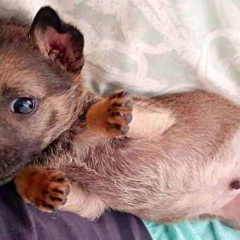 Petrified 6-Week-Old Puppy Cowered In A Corner As Evil Kids Threw Rocks At Him