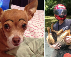 15 Times Owners Left Their Pets With The Sitter And Ended Up Totally Regretting It