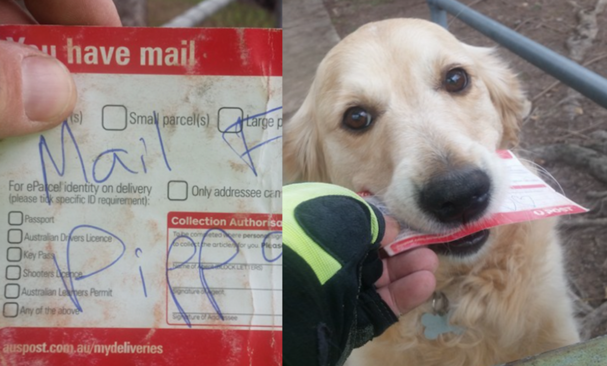 Dog Waits For Mail Every Day, So Mailman Improvises On Days There Is None