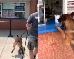 Police Dog Treats Himself After A Long Day On The Job