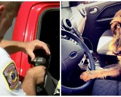 Owner Leaves Dog Locked In Hot Car With Dashboard Scalding At 158 Degrees