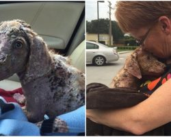 Puppy Who Was Violently Thrown From Truck Finally Finds Happiness After Healing