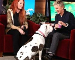 Rescue Pit Bull Visits Ellen's Show, And Wins Over The Entire Audience
