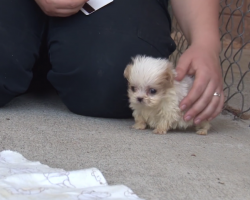They Introduce This Rescue Pup To A New Friend – And It's Too Adorable For Words