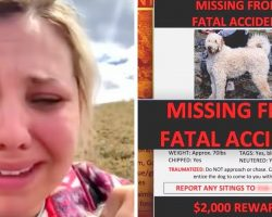 Car Crash Kills Her Mom & Scared Dog Runs Away, Daughter Begs For Help To Find Him