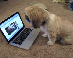 The Singing Shih Tzu Will Make You Smile From Ear To Ear!