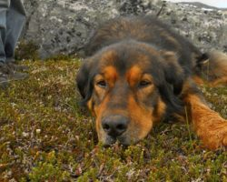 The 16-Year-Old Dog Who Laid It All On The Line For The Ones He Loved Most