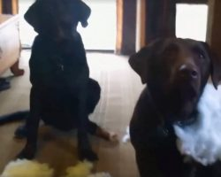 Dad Asks Which Dog Made The Giant Mess, Gets Hilarious 'Straightforward' Answer