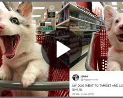 Mom Brings 4 Month Old Pup To Target And His Photos Are Winning Over The Internet