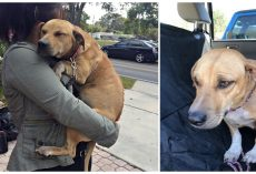 Terrified Dog Won't Stop Hugging Her Rescuers