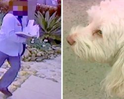 Video Surfaces Showing Mailman Routinely Pepper-Spraying Tiny Dog From The Gate