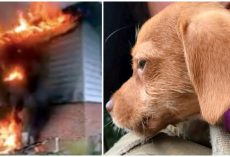 Firefighters Rescue Tiny Puppy Trapped In Basement As Home Burns To The Ground