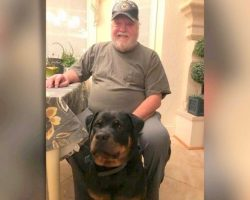 Veteran Spends Night In Car After Hotel Denies Him Room Due To His Service Dog