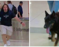 Retired Marine Sergeant Has Tearful Airport Reunion With Former K9 Partner
