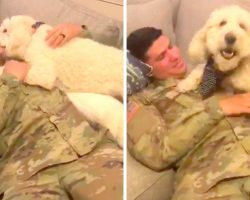 Dog Senses Soldier Dad's Return Without Seeing Him, Goes Berserk & Smothers Him
