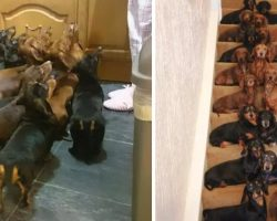 Man Wins Bet With Friend Getting All 16 Dachshunds To 'Sit Pretty' On Steps