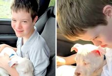 Comfort Puppy Stolen From Teen Struggling With Down Syndrome, $500 Reward Offer