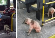 Bus Driver Breaks Rules To Save Two Stray Dogs