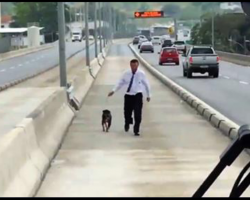 Passengers Applaud As Bus Driver Stops To Rescue Stray Dog On Busy Highway