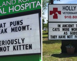 16 Signs From Vets With Great Senses Of Humor About Cats