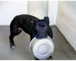City Deems Dog 'Mean,' Locks Her Up For 4 Years With Just A Bowl To Play With