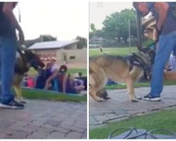 Authorities Seek Man Who Punched German Shepherd At Family Holiday Concert