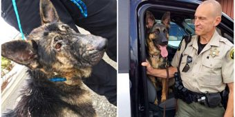 Deputy Helps Emaciated Shepherd Stuck In Blizzard And Adopts Her 5 Months Later