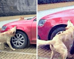 Stray Dog Brings His Friends To Destroy The Car Of The Evil Man Who Kicked Him