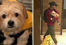 Thief Tricks Couple With A Popular Dog Walking App To Steal Their Beloved Pup