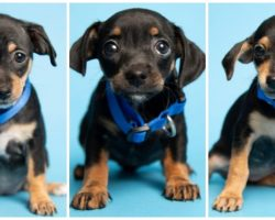 Duffel Bag Full Of Puppies Found In Hot Dumpster, Police Need Help From Public