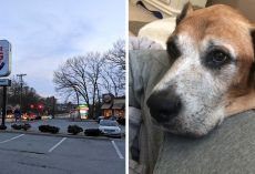 Local Burger King Brings Joy To Dying Dog By Giving Him Free Burgers In Final Days