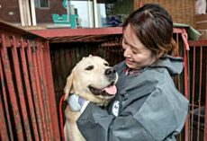 Largest Dog Meat Market In South Korea Is Finally Shut Down For Good, Dogs Freed