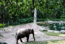 Bronx Zoo Mistreats World's Loneliest Elephant For Years But Refuses To Let Her Go