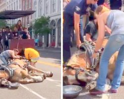 They Ignores Horse's Cries, Make Him Pull Tourists In The Sun Till He Passes Out