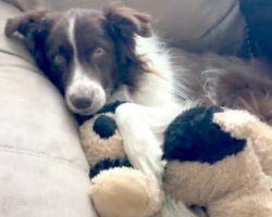 Cancer Stole Away His Best Friend, He Thinks Stuffed Toy Is Sibling And Hugs It