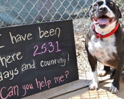 Lonely Dog Spent 2,531 Days In A Shelter, Waiting For Someone To Love And Adopt Her