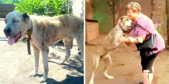 Mom Broke Down In Tears On Seeing Her Stolen Dog Barely Surviving After 2-Years