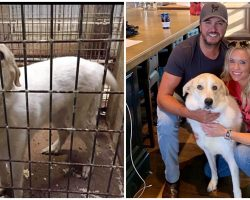 Luke Bryan Fosters Rescue Dog Who Was Crammed Into Tiny Cage At Kill-Shelter