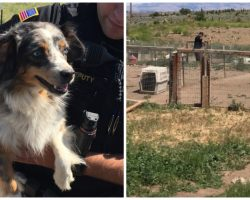 "Sheriff's Office Seizes Nearly 60 Dogs From ""Family Owned"" Dog Breeder"