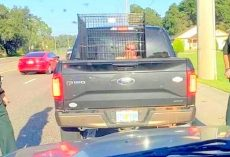 Woman Locks Grown Man In Dog Cage & Drives Around Town, Gets Pulled Over By Cops