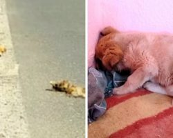 Puppy Found Next To Corpse Of His Dead Mother And Pushes Face Into Wall & Shuts Off