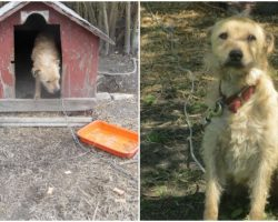 "Dog Chained Up Outside For 5-Years Was Hit Every Time He ""Got Too Excited"""