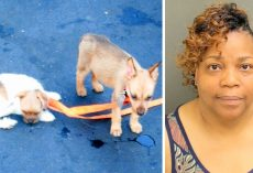 2 Puppies Die Painfully After Woman Locks Them In Hot Car, 3rd Puppy Is Critical