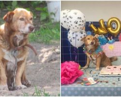 Dog Chained Up For 12 Years Is Set Free And Experiences Love & Fun During Her Final Days