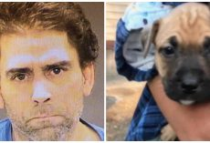 Drunk Man Strikes Puppy With Guitar, When Girlfriend Intervenes He Beats Her