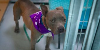 Dog In Shelter For 420 Days Is Finally Adopted, Only To Be Returned The Next Day